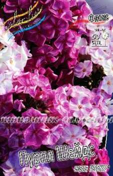 Флокс FRECKLE® ПУРПЛ ШЕЙДС / Freckle® Purple Shades (kl-6911-fl-s19)